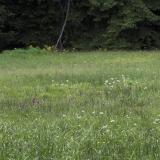 Lokalita druhu Dactylorhiza majalis