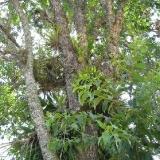 Porost orchidejí