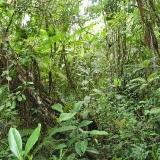 Hezký les