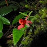 Parque Nacional Podocarpus