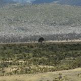 Planina Wikikama, země stromových kapradin