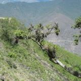 Oáza v pustině u cesty do Ayabacy