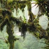 Mlžný horský prales